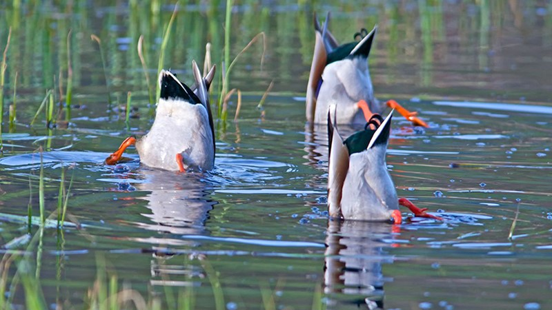 What is a Quack & How do we spot them?